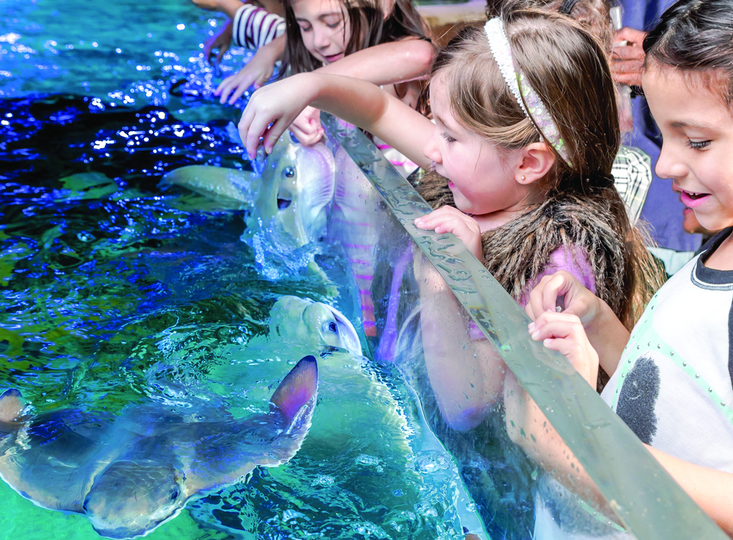 Kids love interacting with the stingrays at SeaQuest because it's always a blast